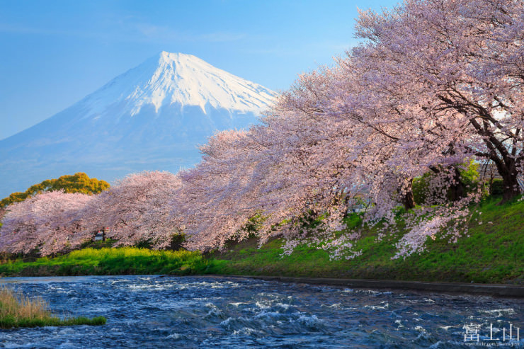 Ảnh đẹp về hoa Anh Đào Nhật Bản