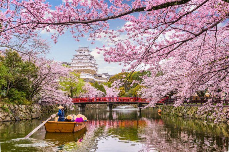 Hình ảnh hoa Anh Đào ở Nhật Bản