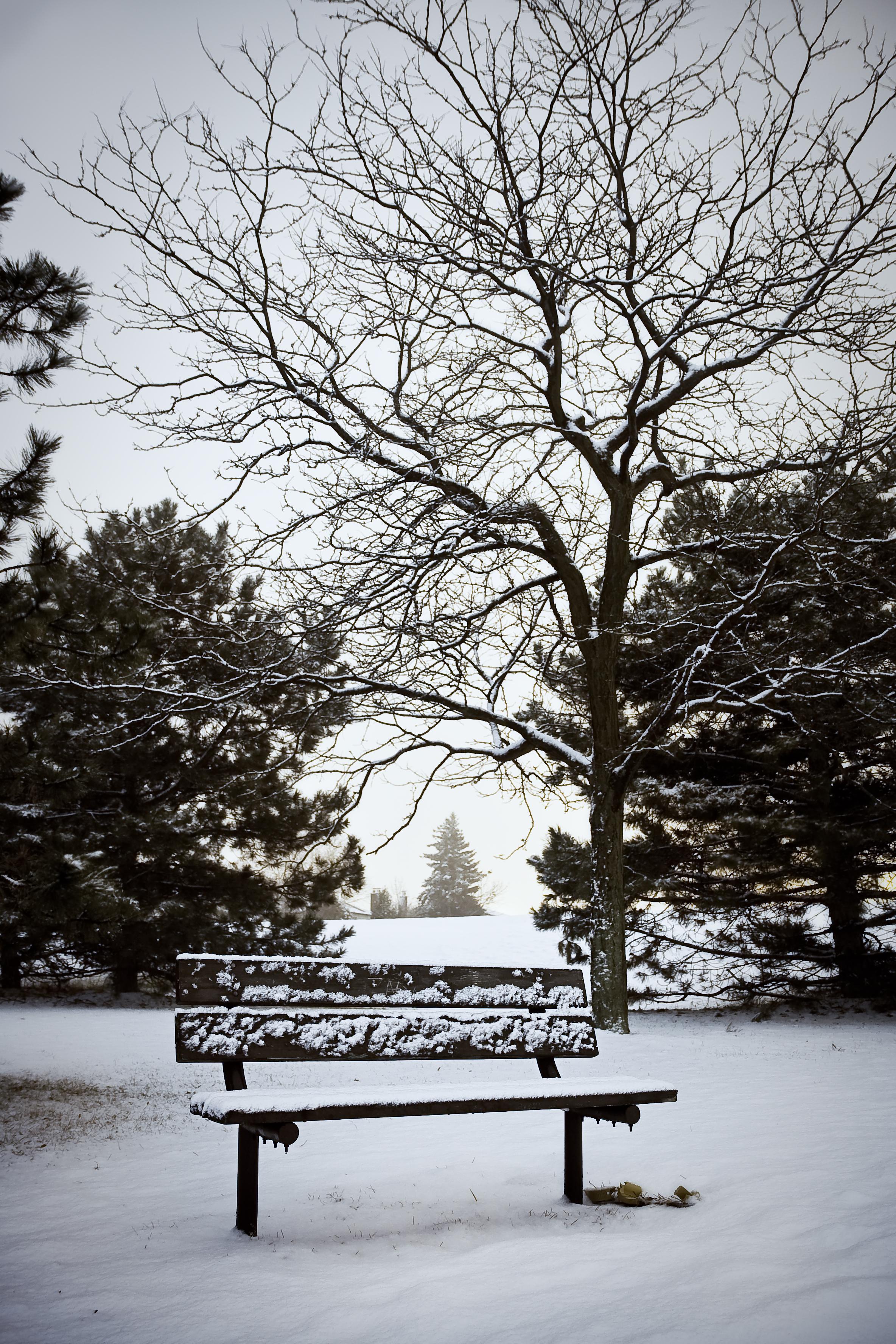 Hình ảnh mùa đông cô đơn