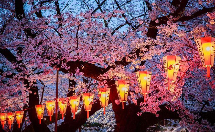 Hình ảnh mùa hoa Anh Đào Nhật Bản đẹp