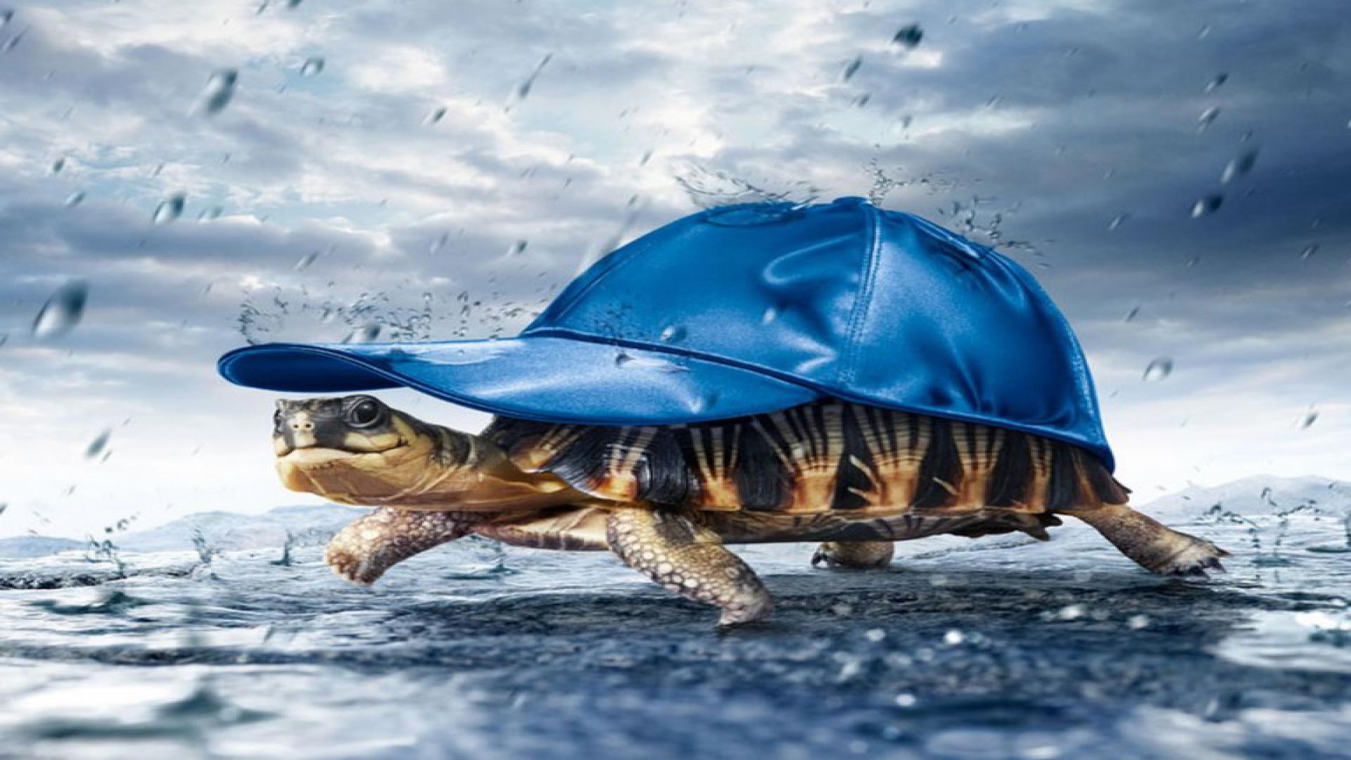 Hình nền 3D rùa biển