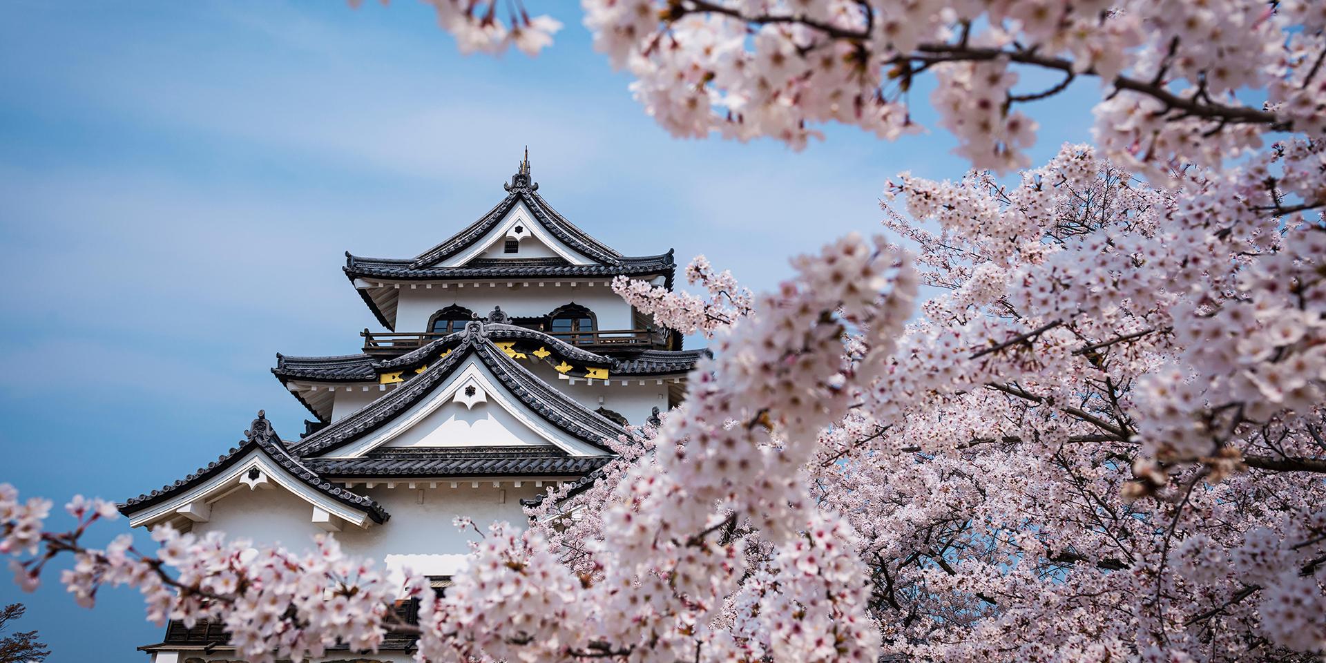 Hoa Anh Đào Nhật Bản đẹp nhất