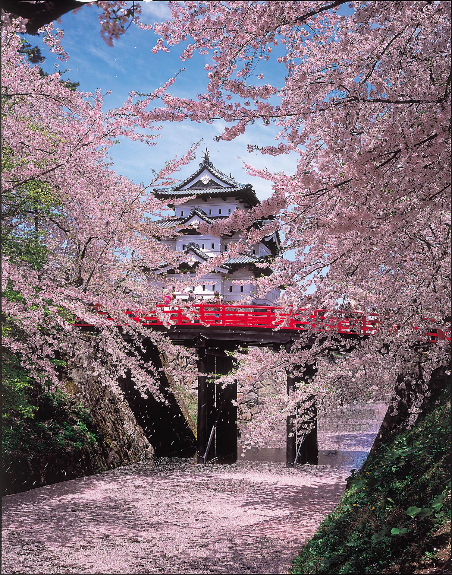 Mùa hoa Anh Đào Nhật Bản