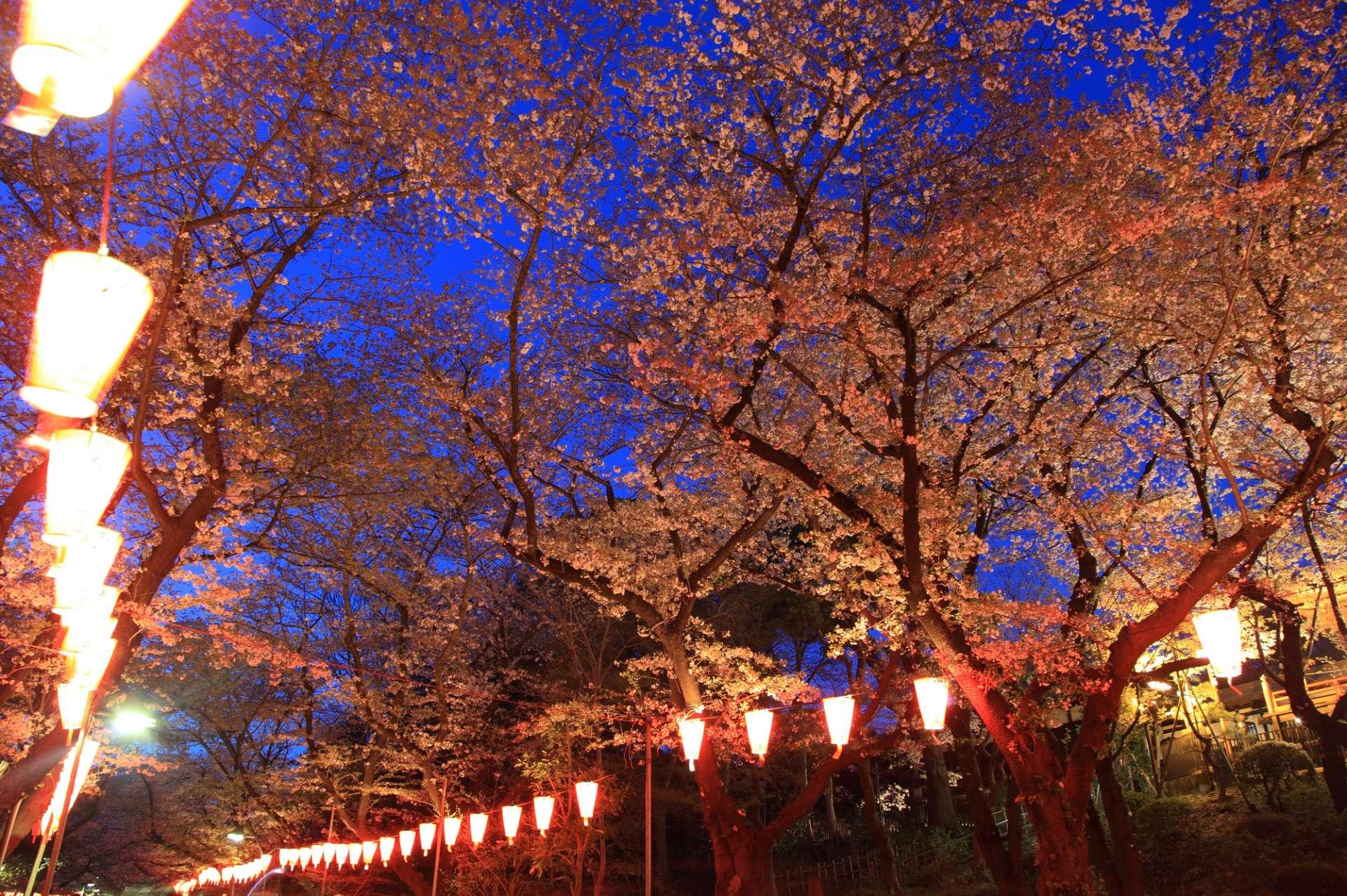 Mùa hoa anh Đào ở Nhật Bản đẹp