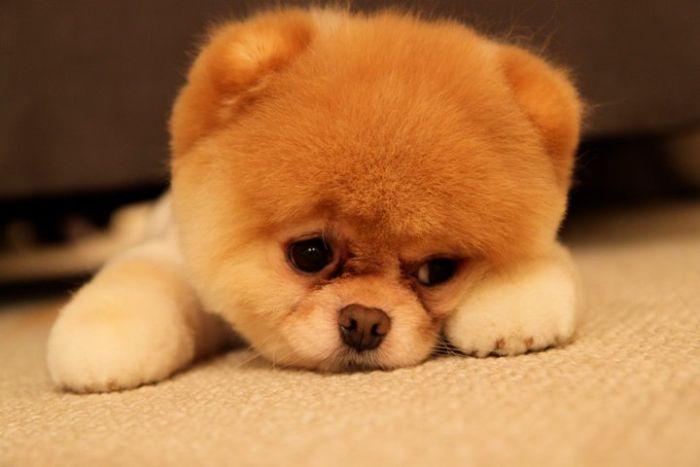 Hình ảnh buồn bã dễ thương của chú cún