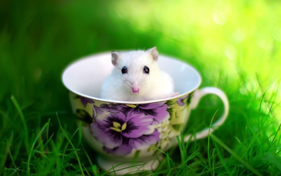 Hình ảnh chiếc cốc dễ thương và đẹp nhất