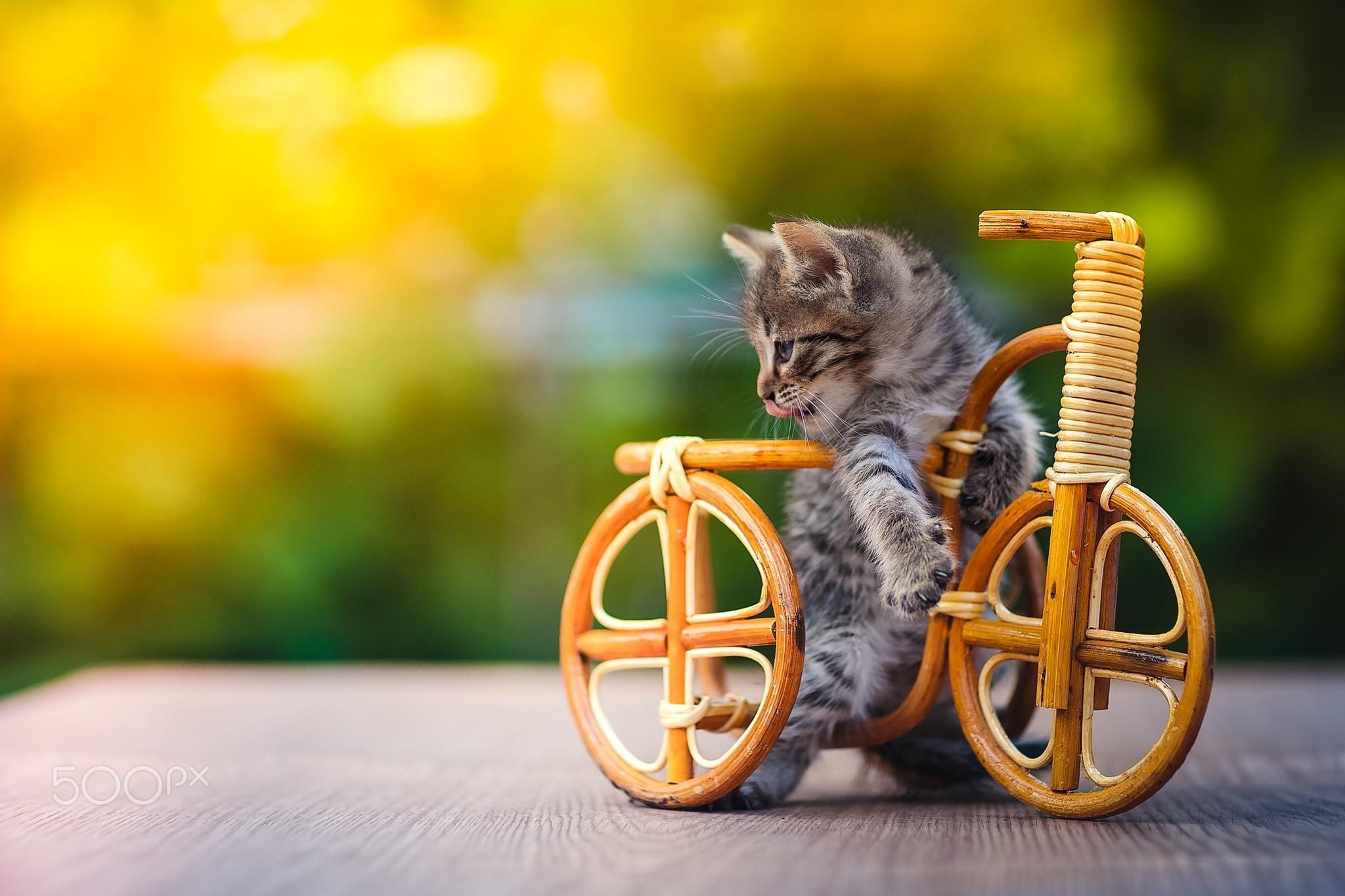 Hình ảnh chiếc xe đạp dễ thương nhất