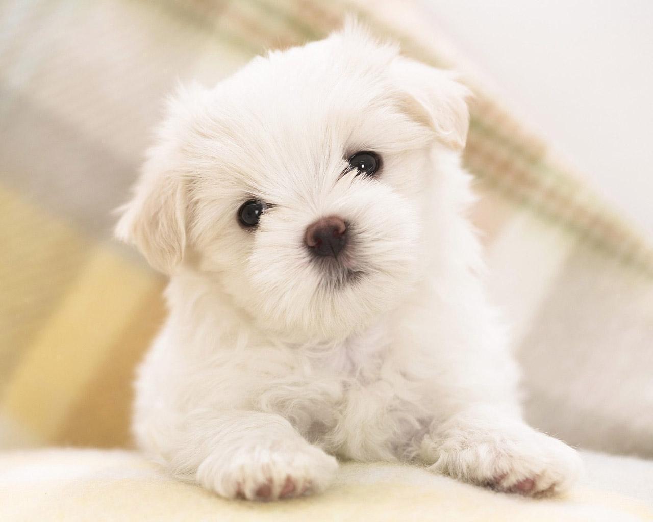 Hình ảnh chó dễ thương và đẹp nhất