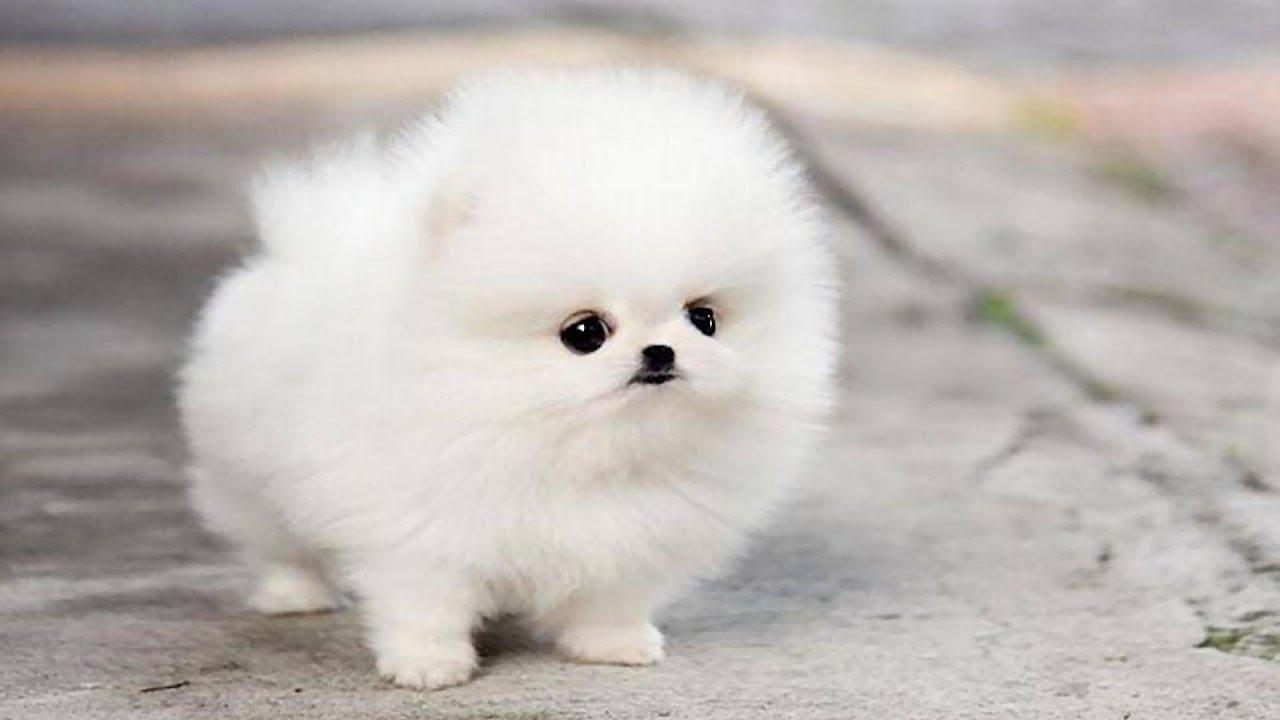 Hình ảnh chú chó dễ thương nhất và đẹp nhất