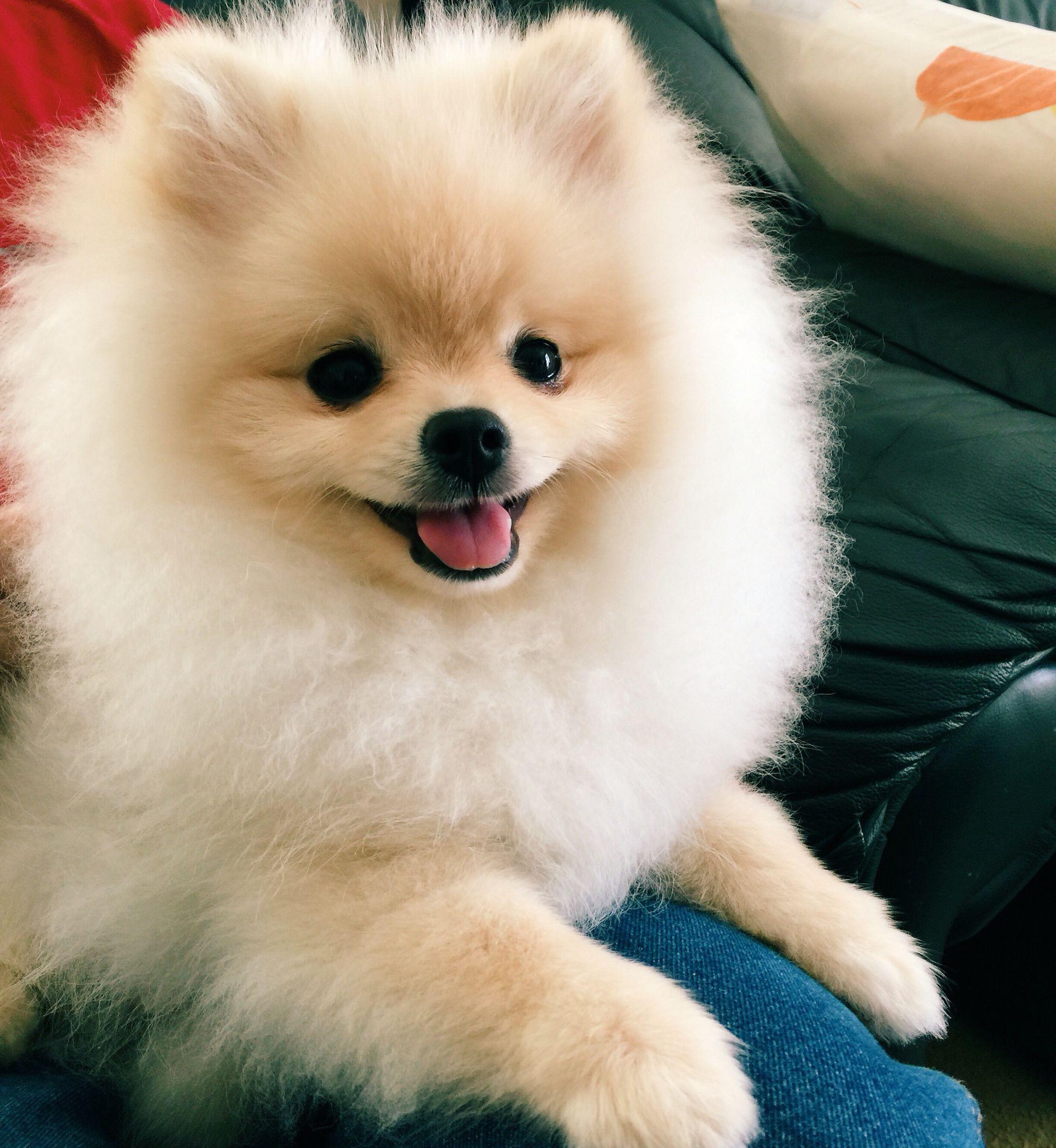 Hình ảnh chú cún dễ thương nhất