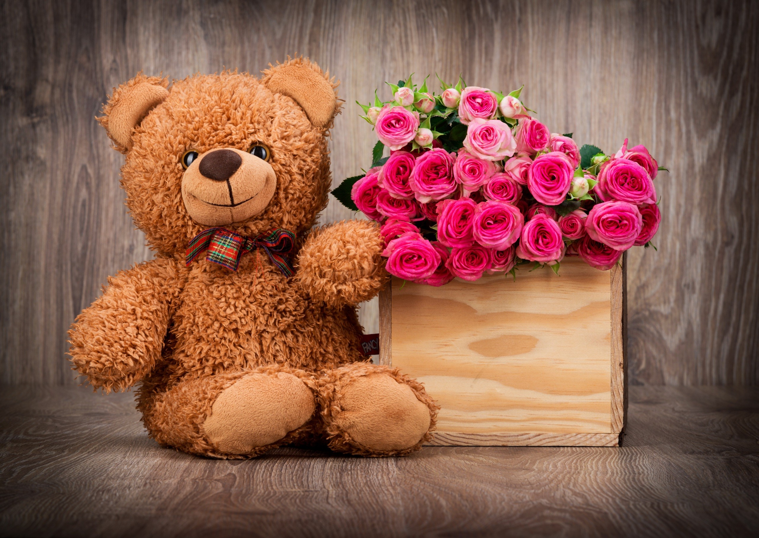 Hình ảnh chú gấu teddy dễ thương nhất