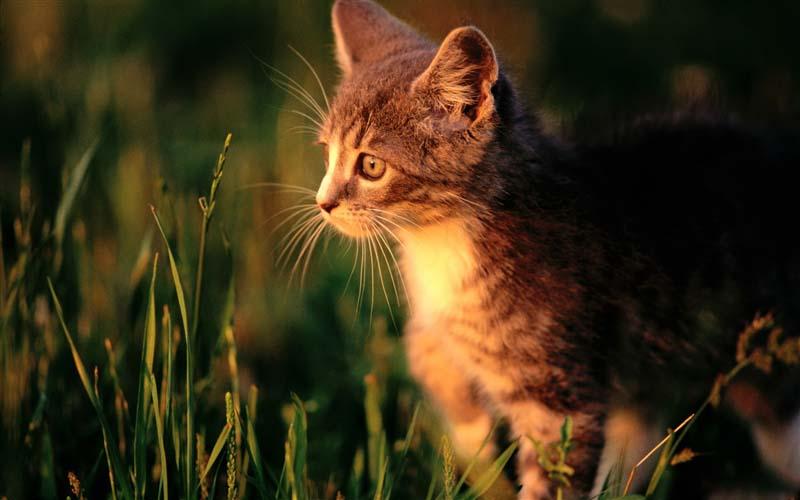 Hình ảnh chú mèo dễ thương nhất về tình yêu
