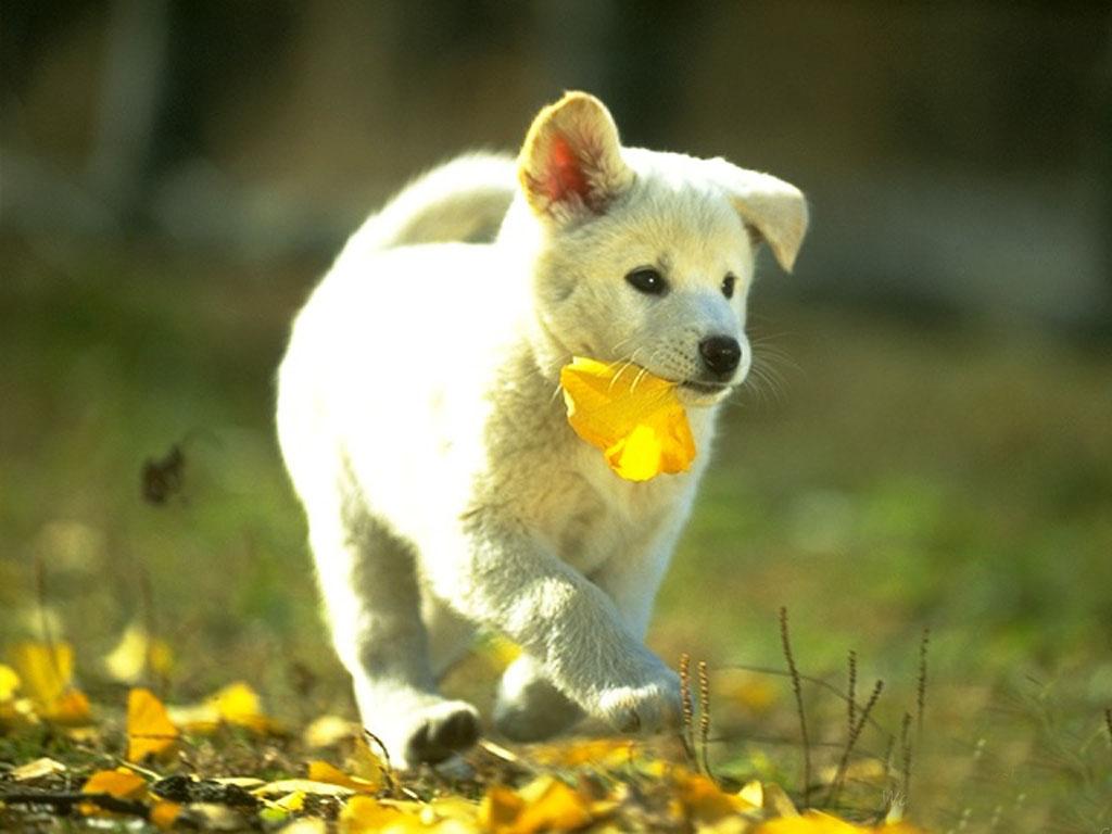 Hình ảnh động vật dễ thương nhất