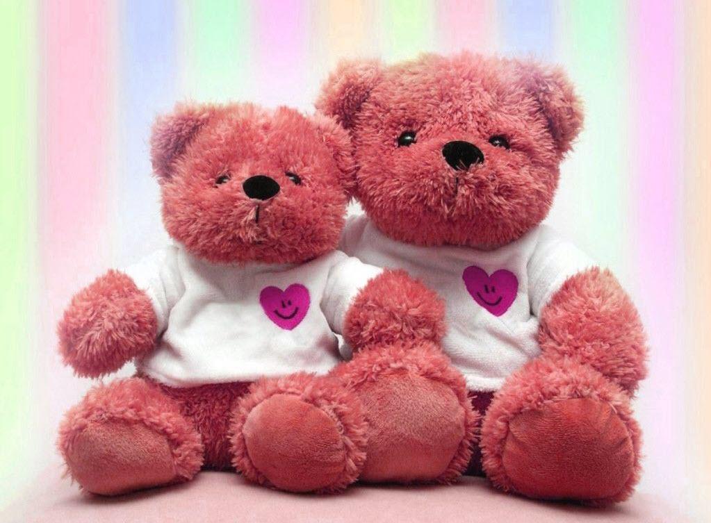 Hình ảnh những chú gấu dễ thương nhất
