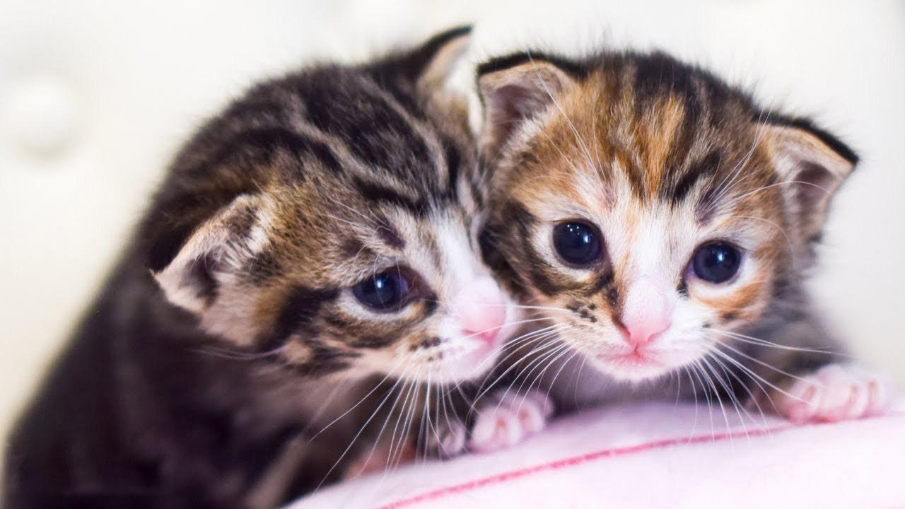 Hình ảnh về con mèo dễ thương nhất