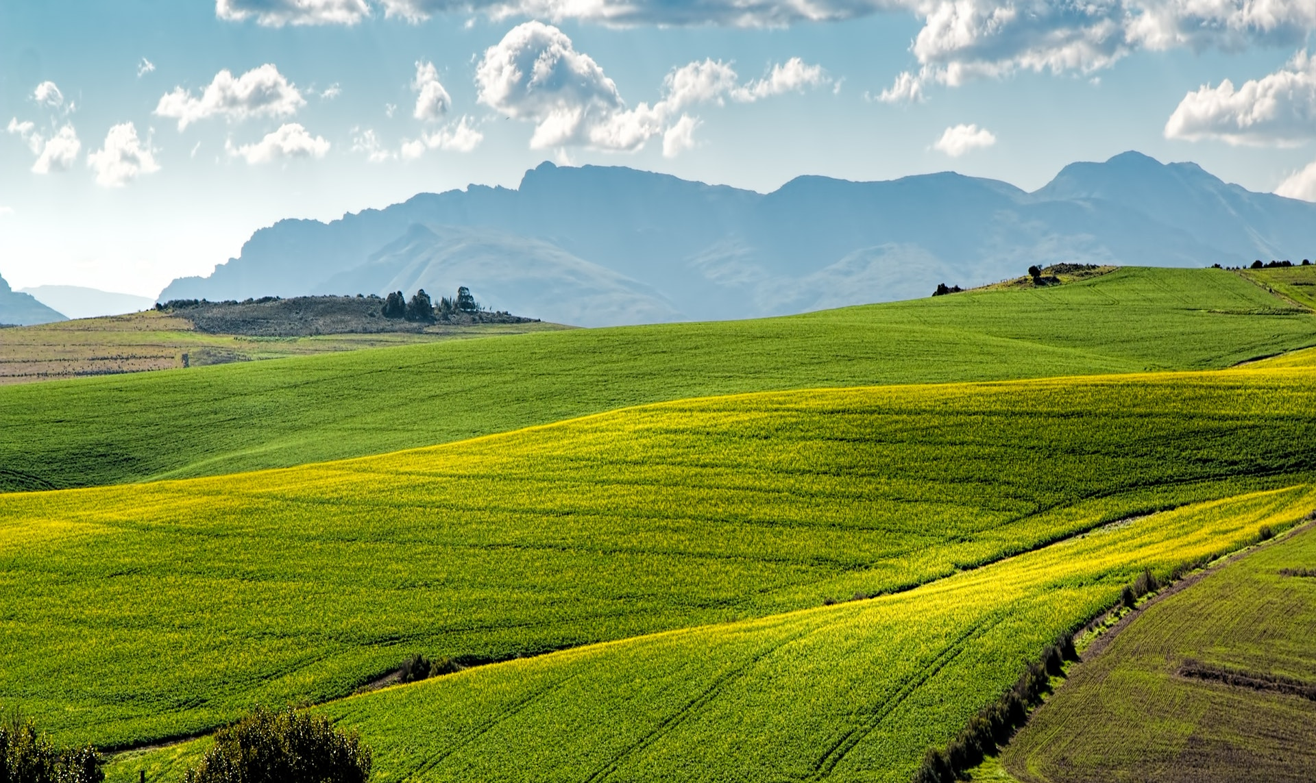 Hình nền đẹp đồng cỏ rộng lớn