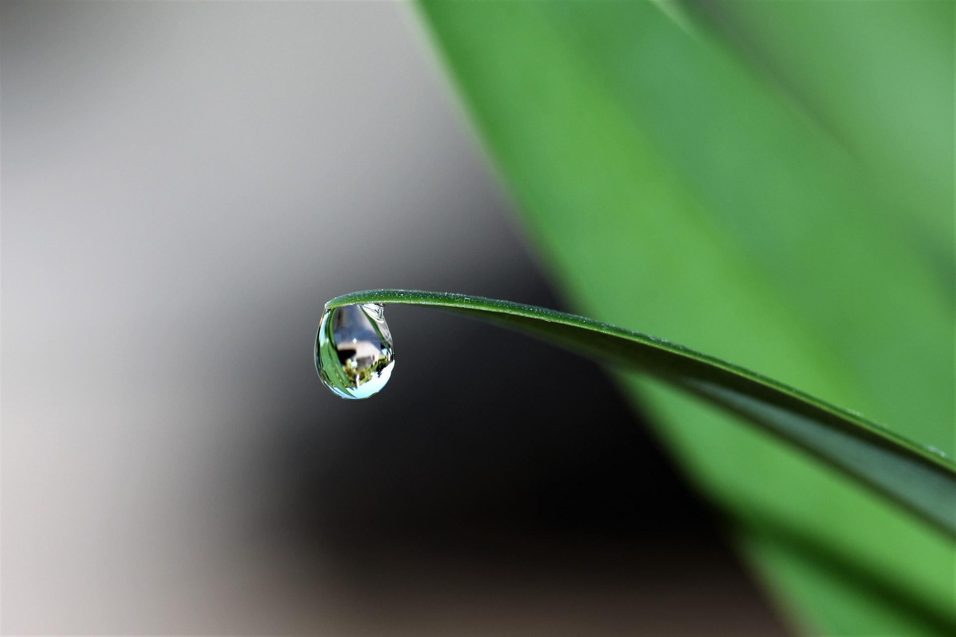 Hình nền đẹp giọt nước long lanh