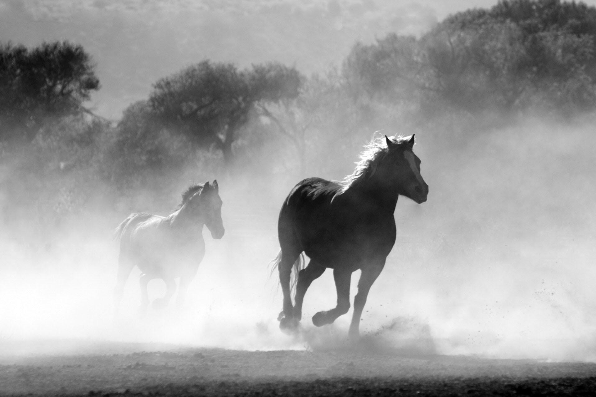 Hình nền đẹp ngựa hoang