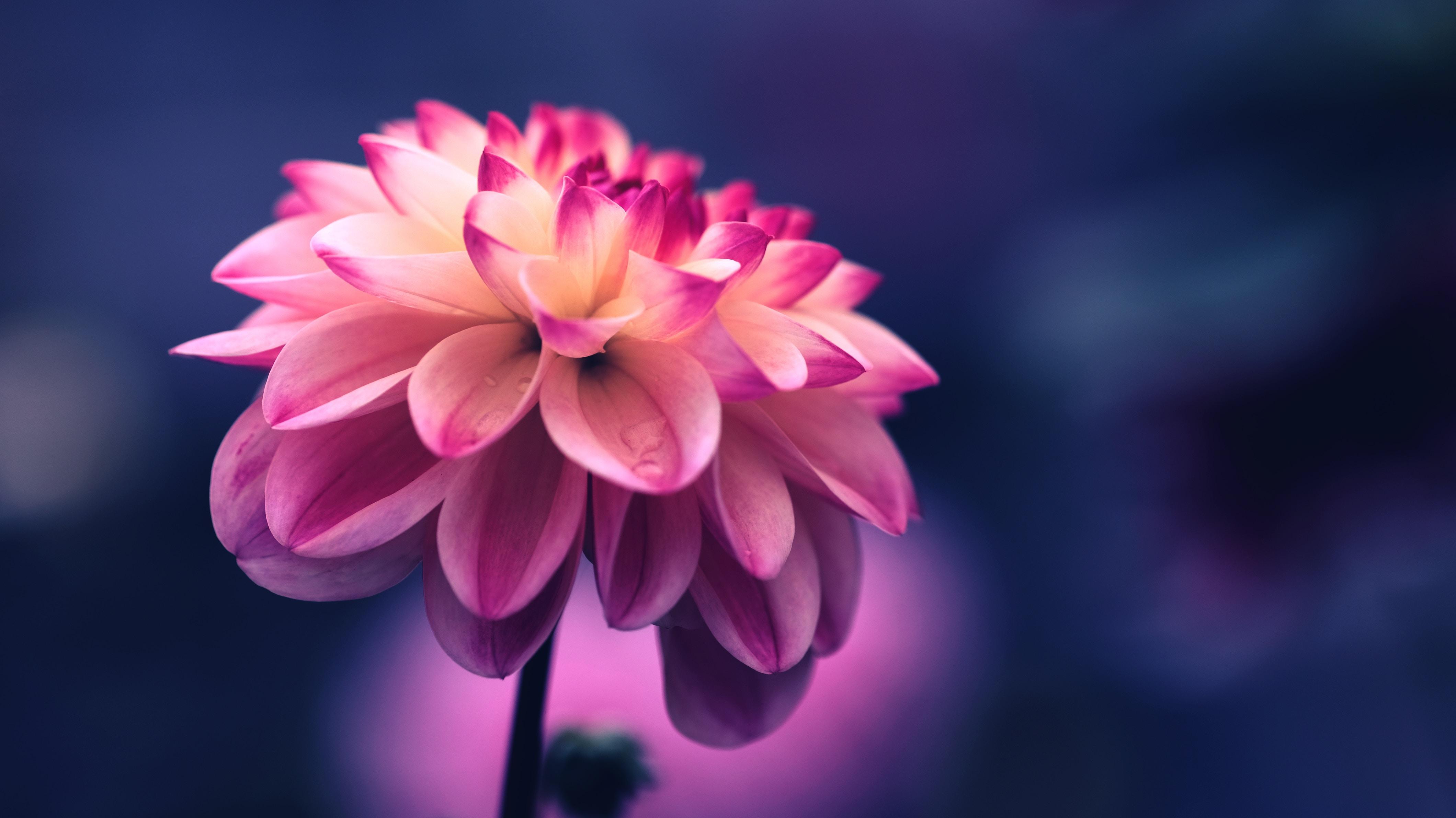 Hình nền hoa đẹp nhất