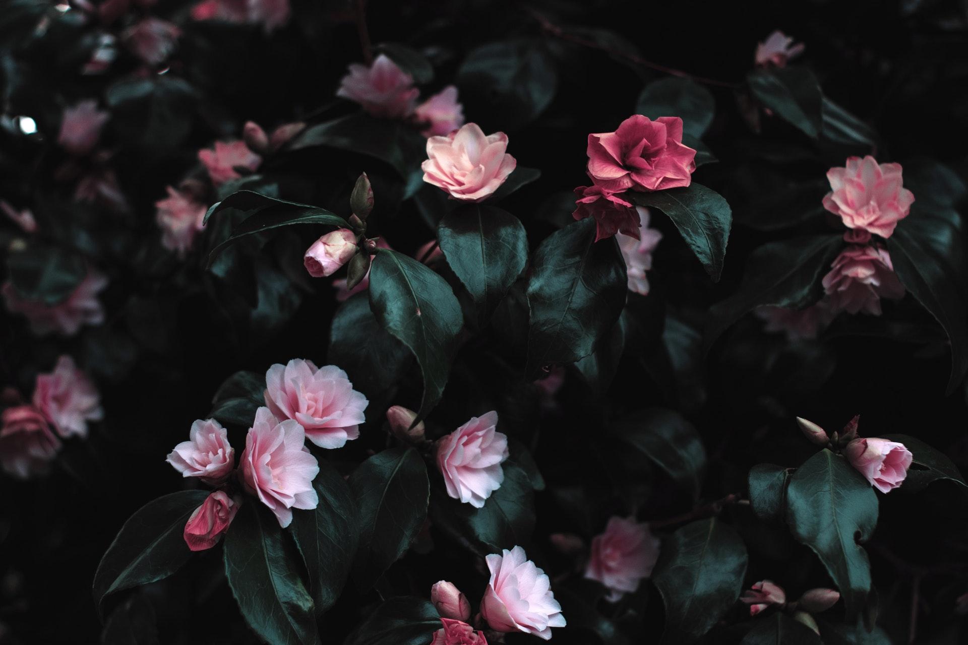 Hình nền hoa đẹp nhẹ nhàng