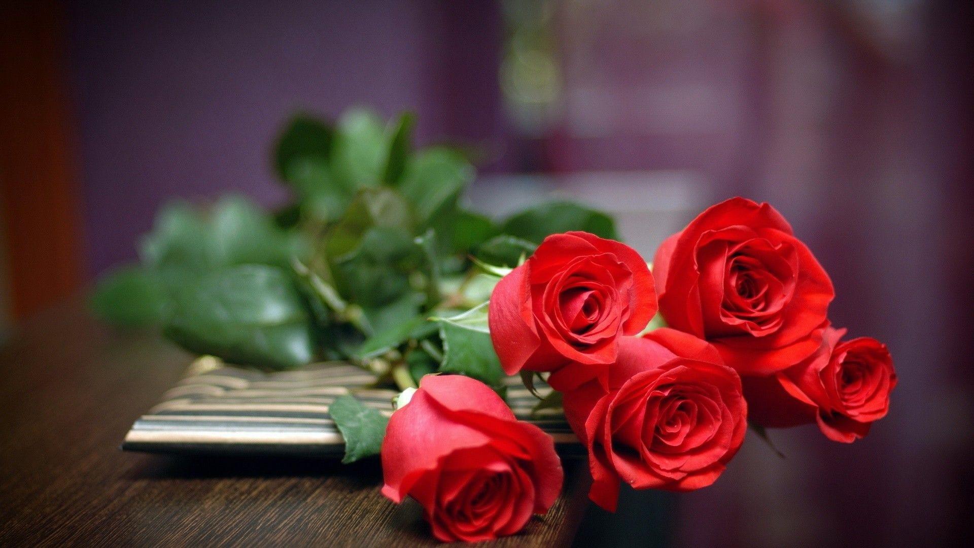 Hình nền hoa hồng dành cho máy tính đẹp nhất
