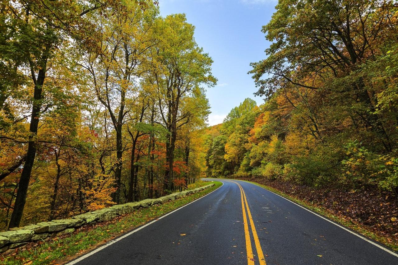 Hình nền phong cảnh rừng cây bên đường