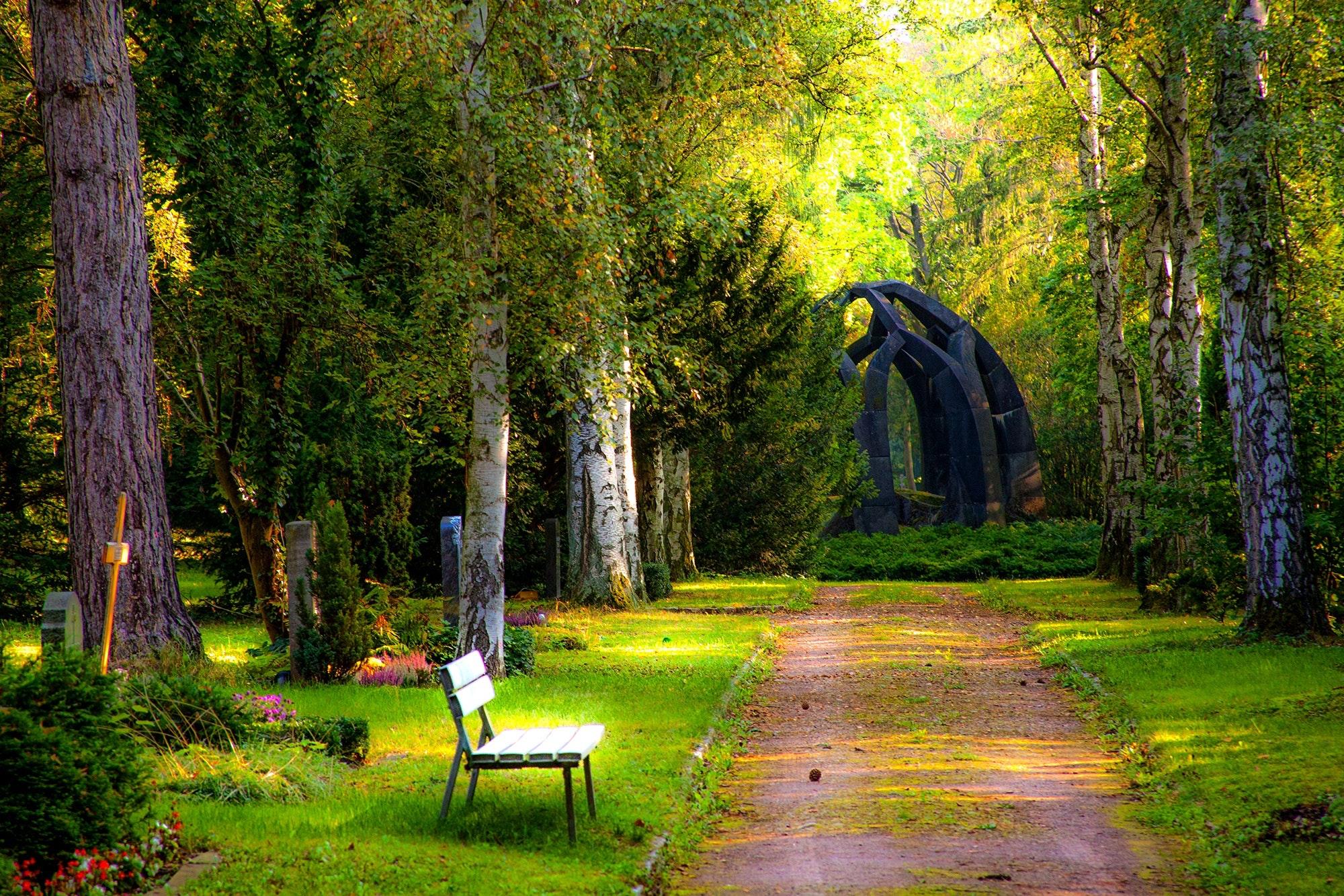 Hình nền phong cảnh rừng
