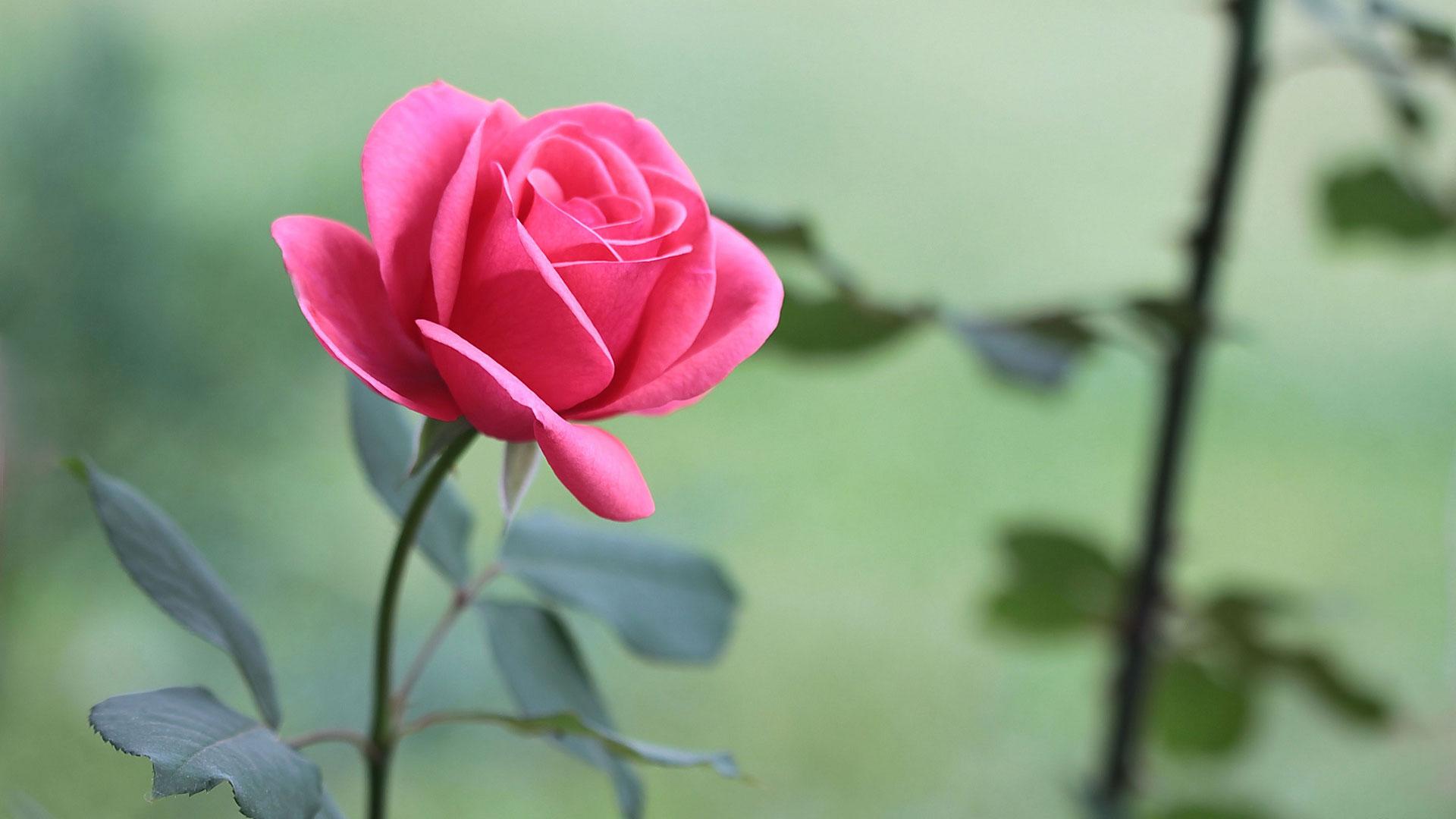 Những hình nền hoa đẹp
