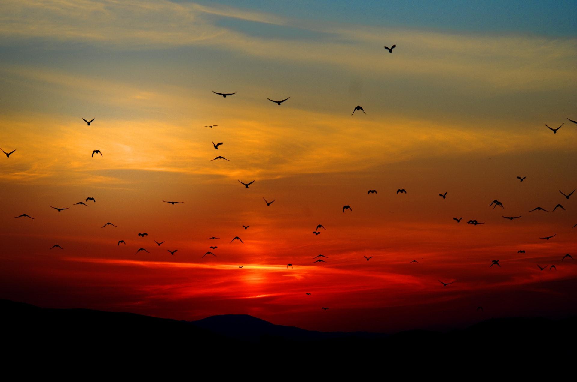 Phong cảnh đẹp đàn chim đón bình minh