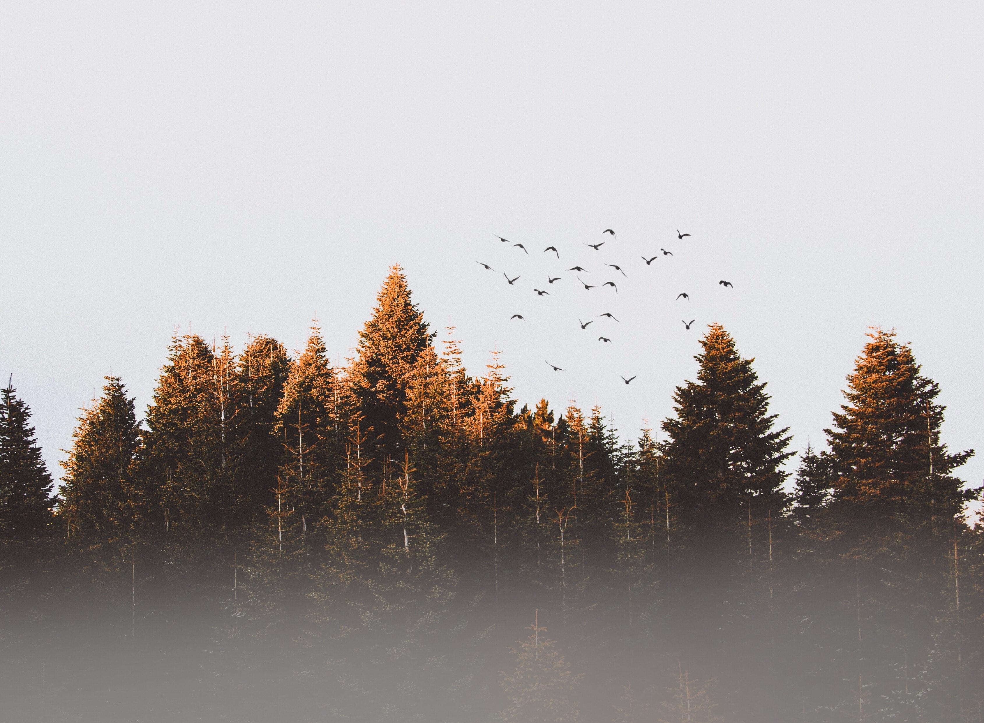 Ảnh bìa Facebook rừng cây