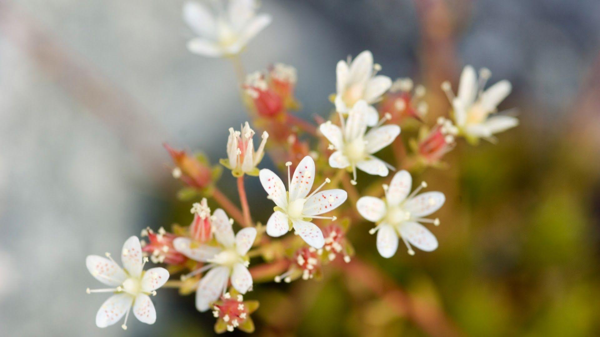 Hình nền hoa cute