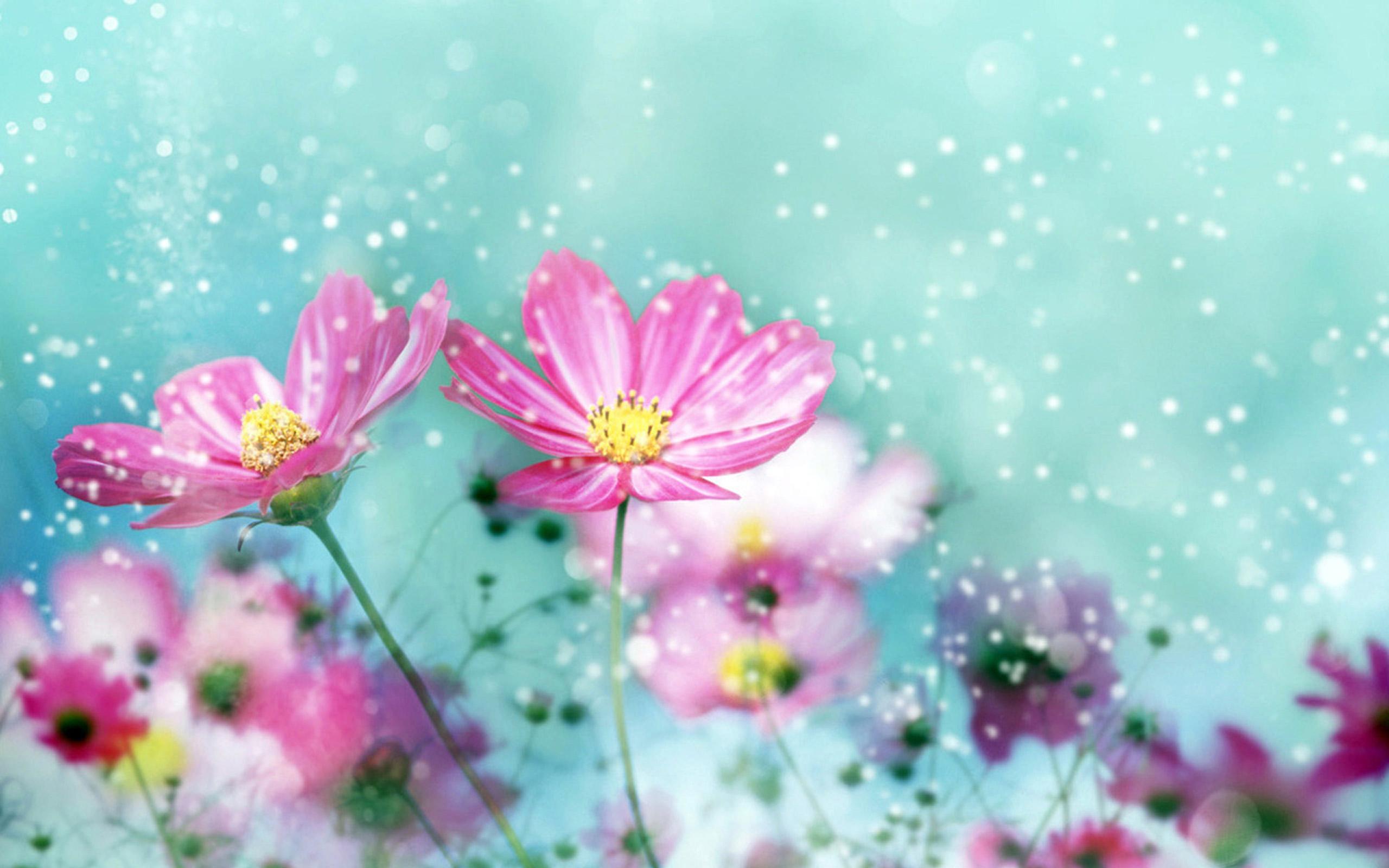 Hình nền những bông hoa cute đẹp nhất