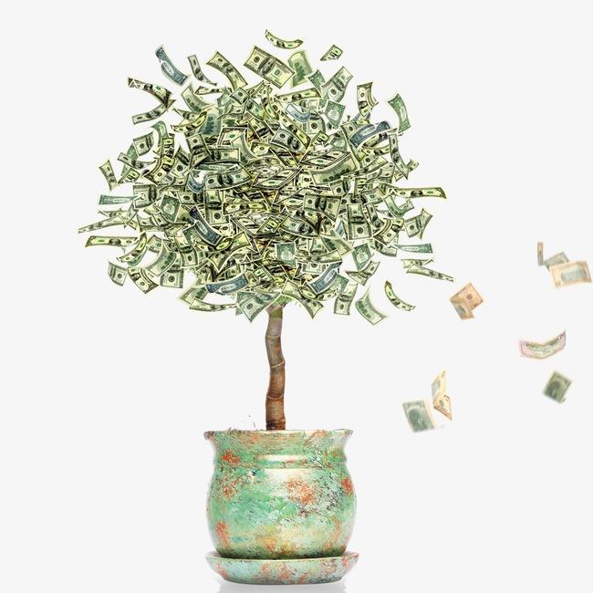 Hình ảnh cây tiền cực đẹp