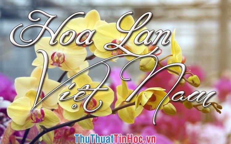 Các loại Hoa Lan đẹp nhất Việt Nam hiện nay