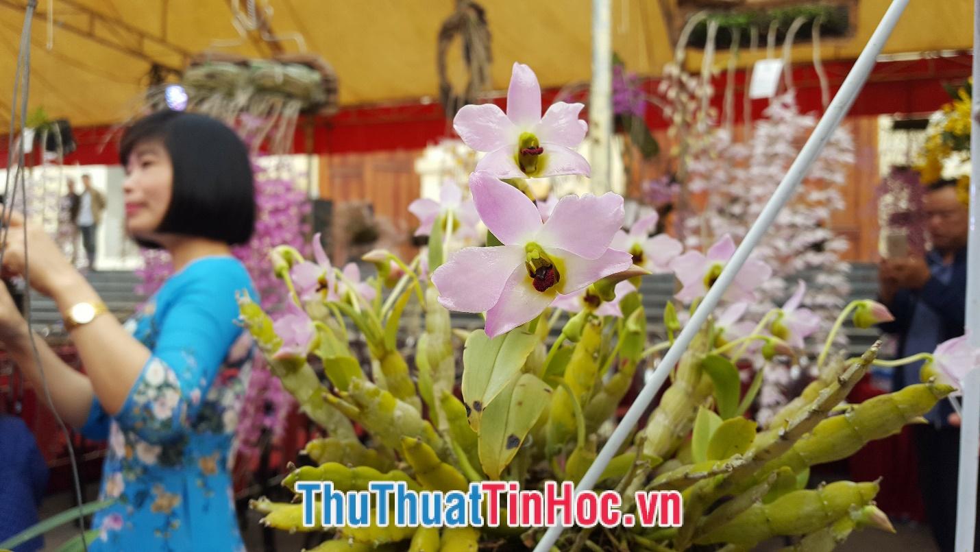 Lan Trần Tuấn (6)