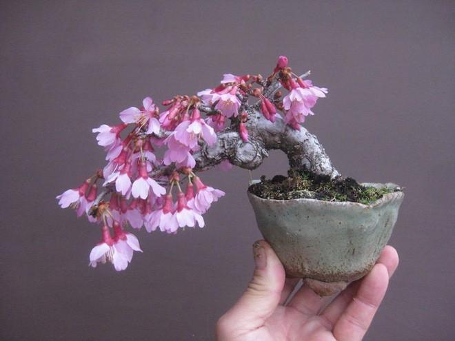 Chậu hoa bonsai mini đẹp