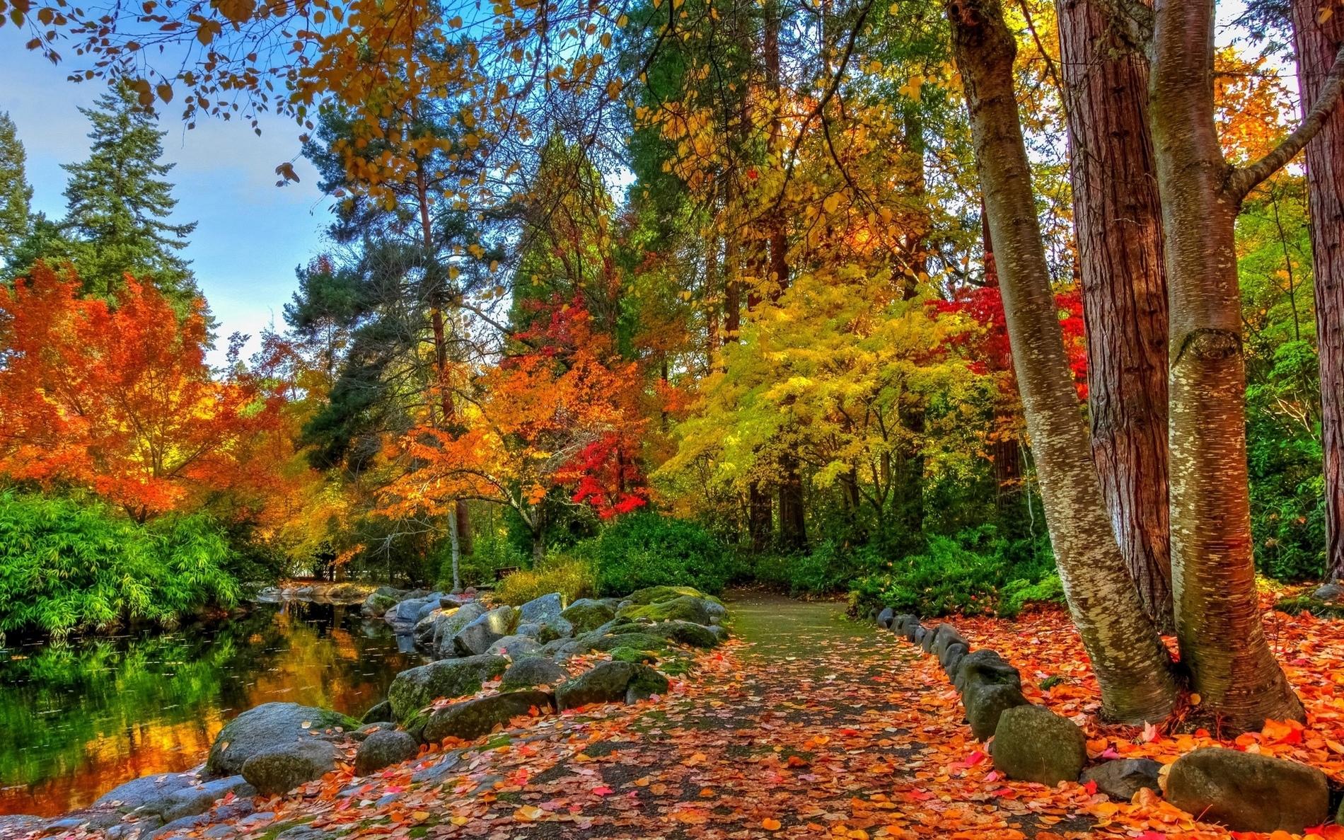 Hình ảnh khu rừng vào mùa thu lá rụng