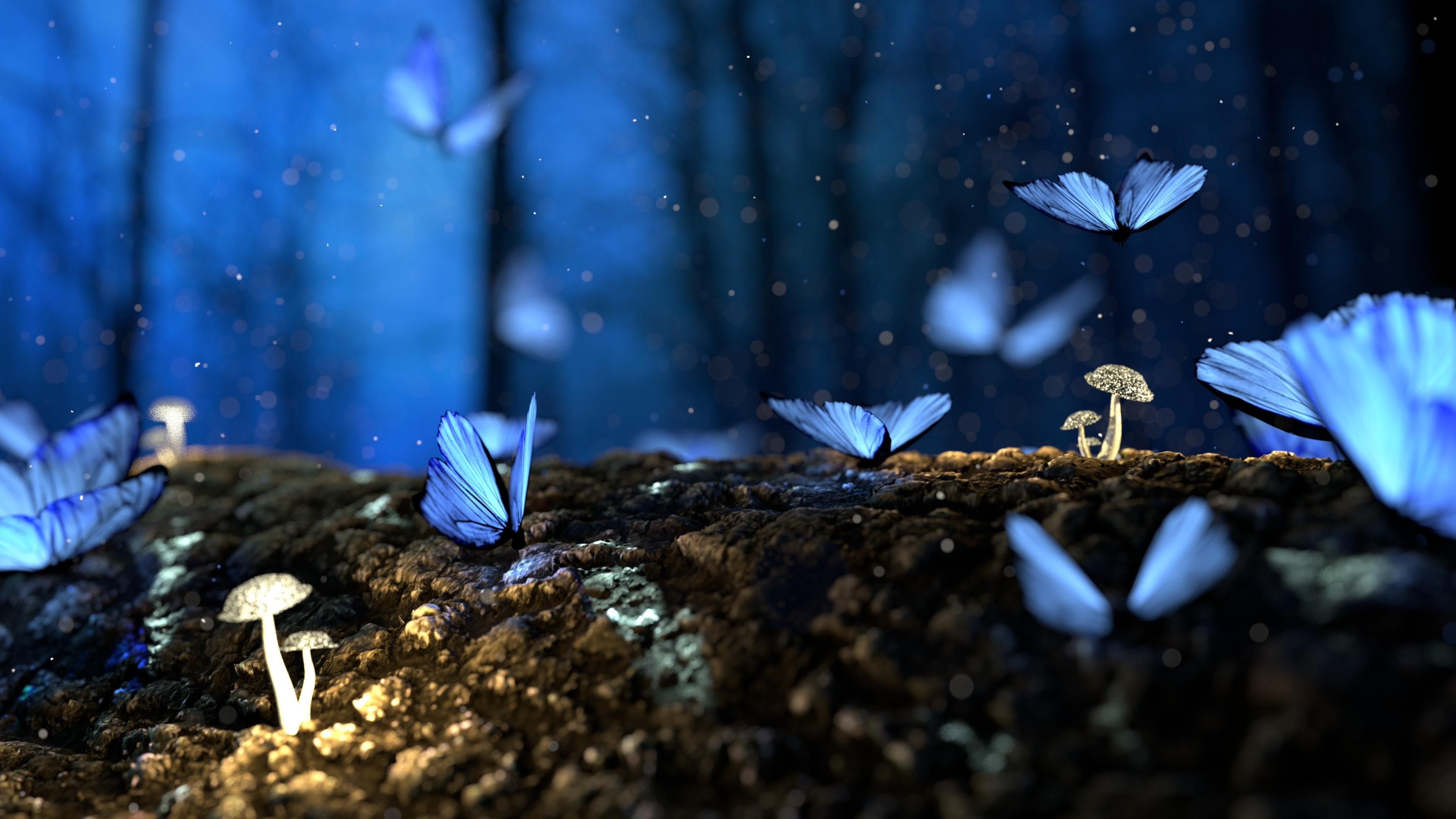 Hình ảnh nền cánh bướm đêm xinh đẹp