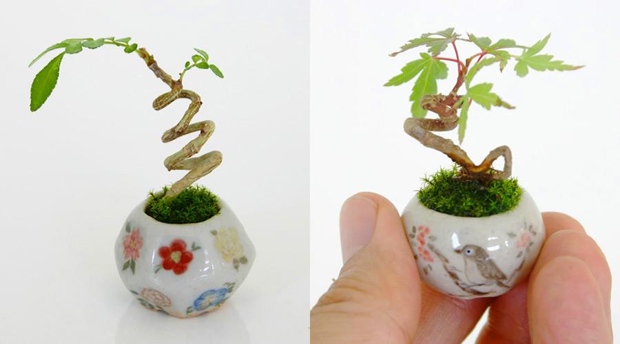 Những cây bonsai mini đẹp nhất