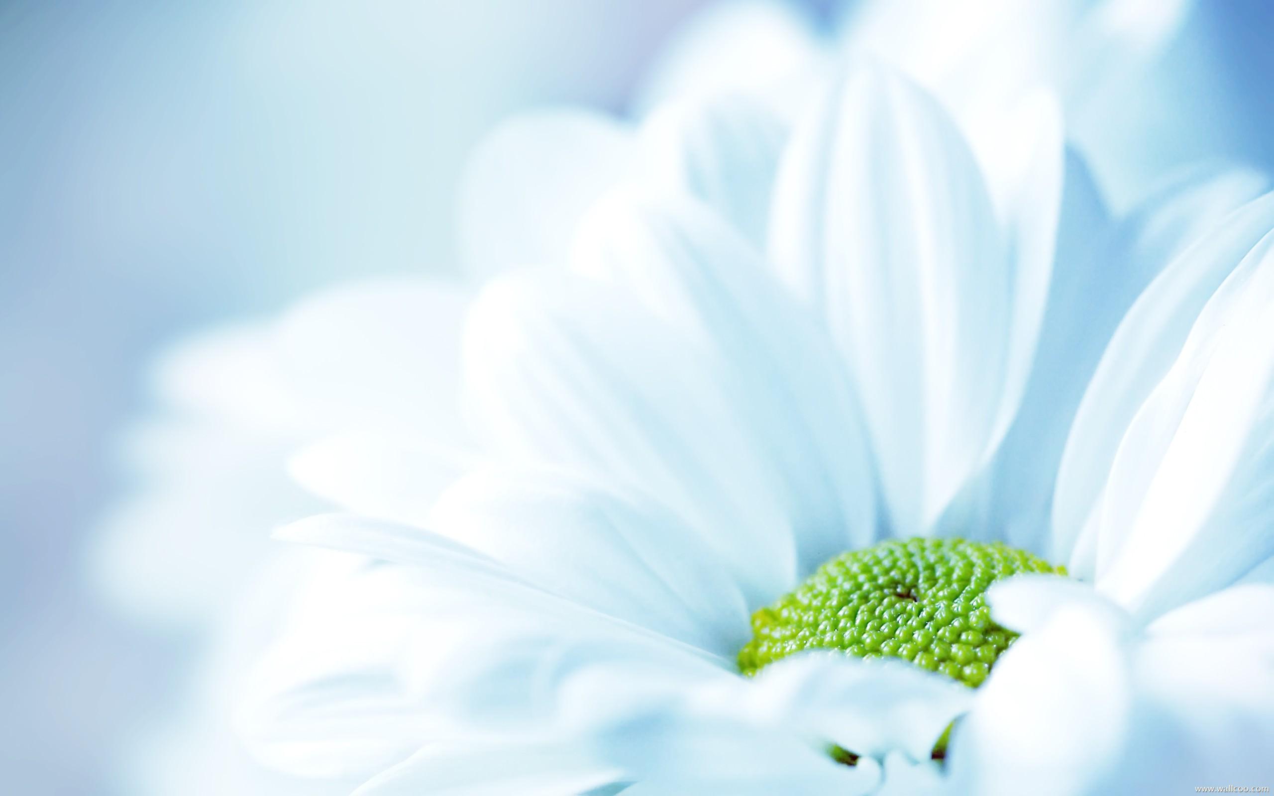 Hình nền Powerpoint đẹp về hoa đẹp và dễ thương nhất