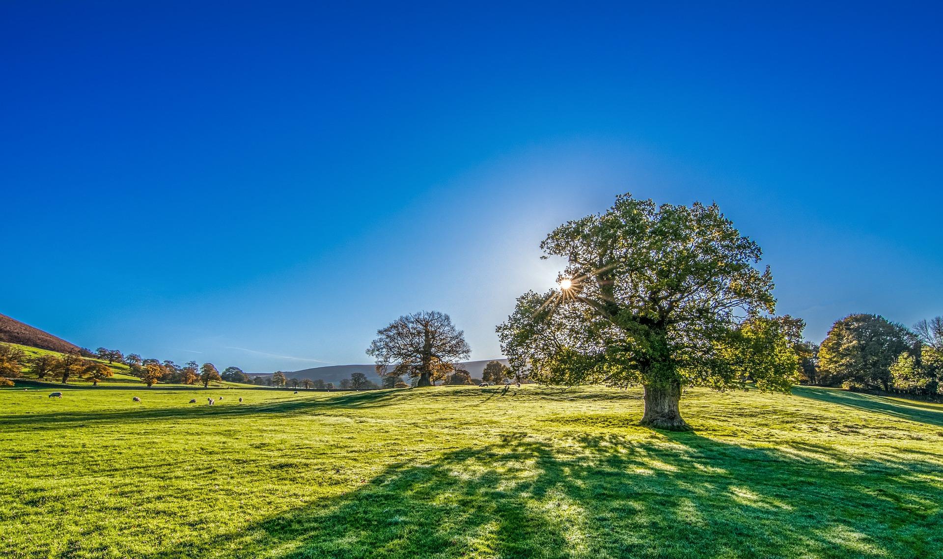 Hình nền bóng cây trong vườn quốc gia