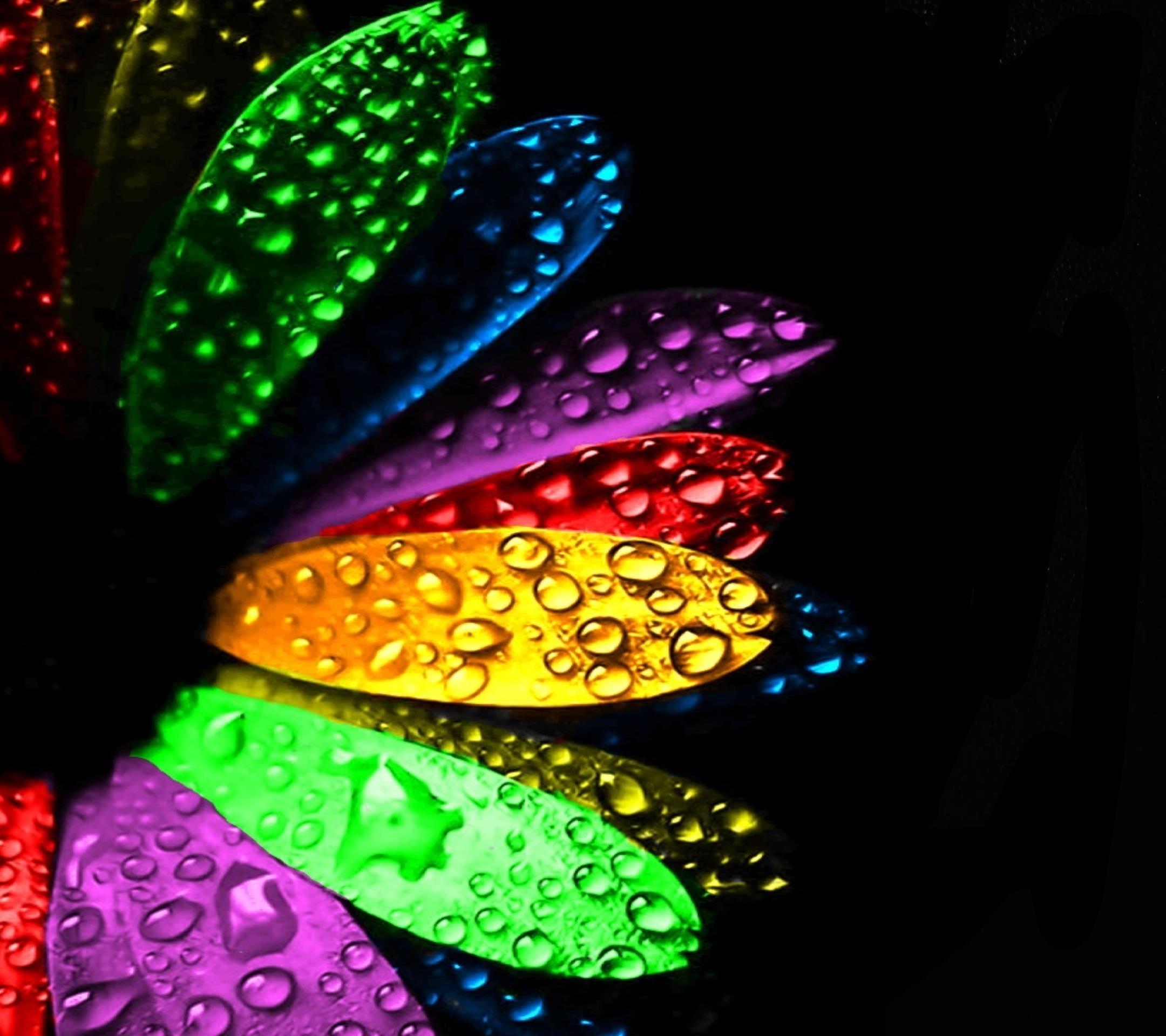 Hình nền bông hoa nhiều màu đọng những giọt mưa