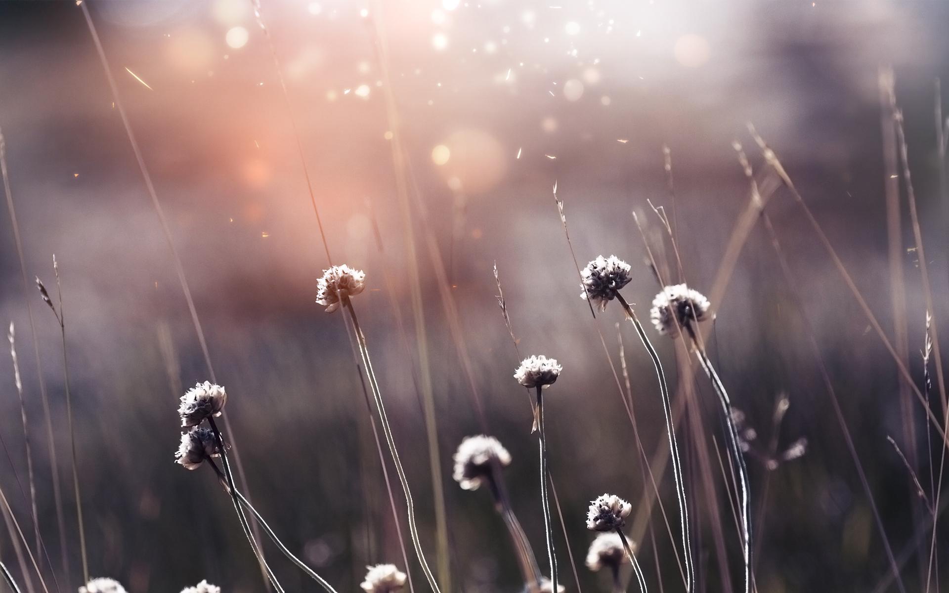 Hình nền gốc cỏ trụi hoa sau mùa đông