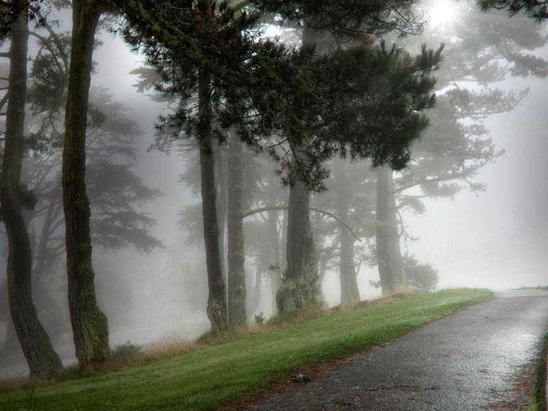 Hình ảnh con đường mù sương