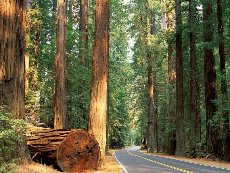Hình ảnh con đường trong rừng