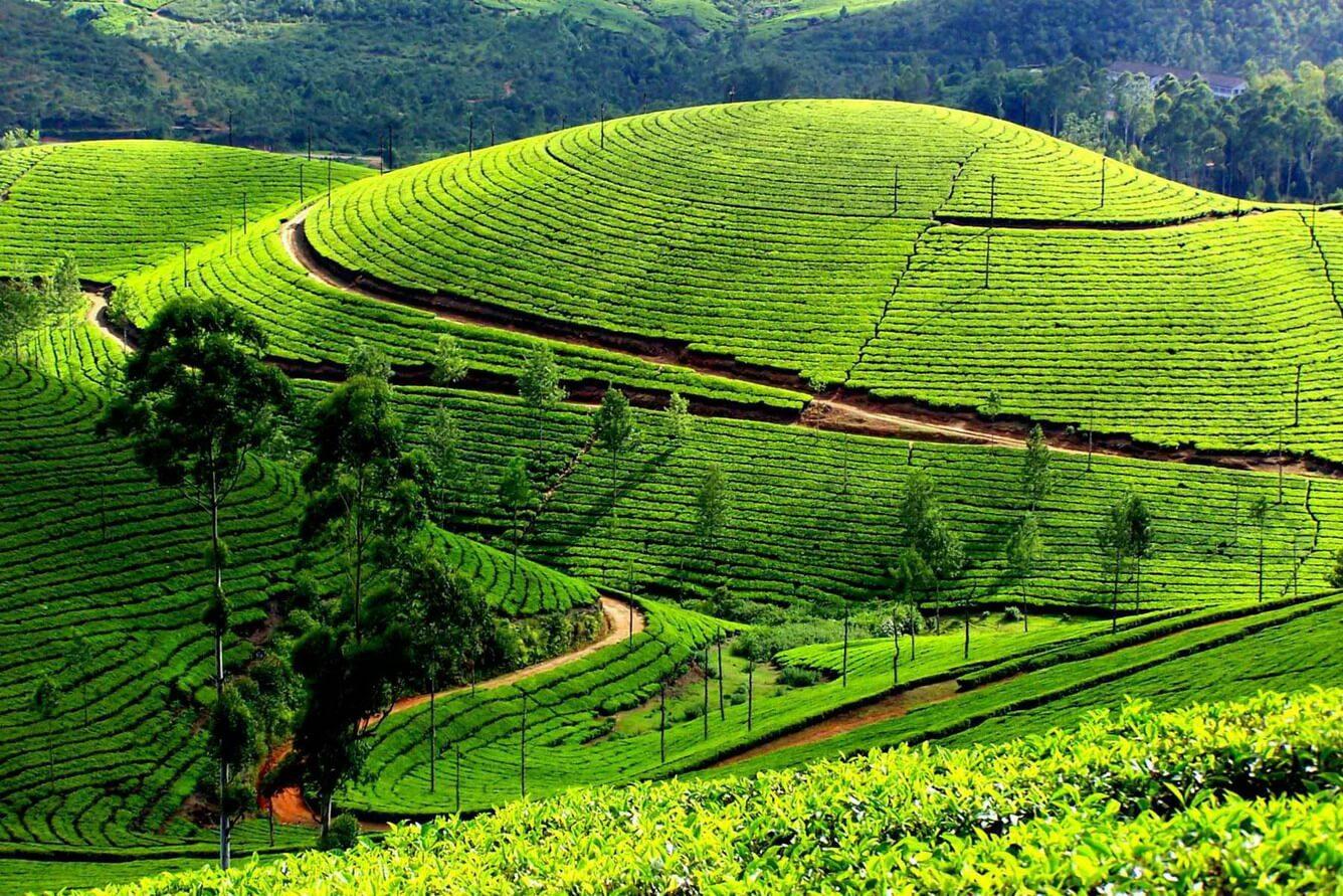 Hình ảnh quê hương em ở Mộc Châu tuyệt đẹp