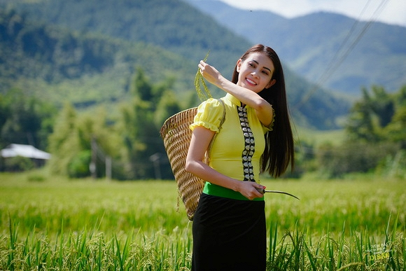 Hình ảnh quê hương gặt lúa trên đồng