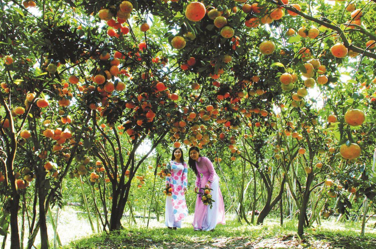 Hình ảnh quê hương Miệt Vườn