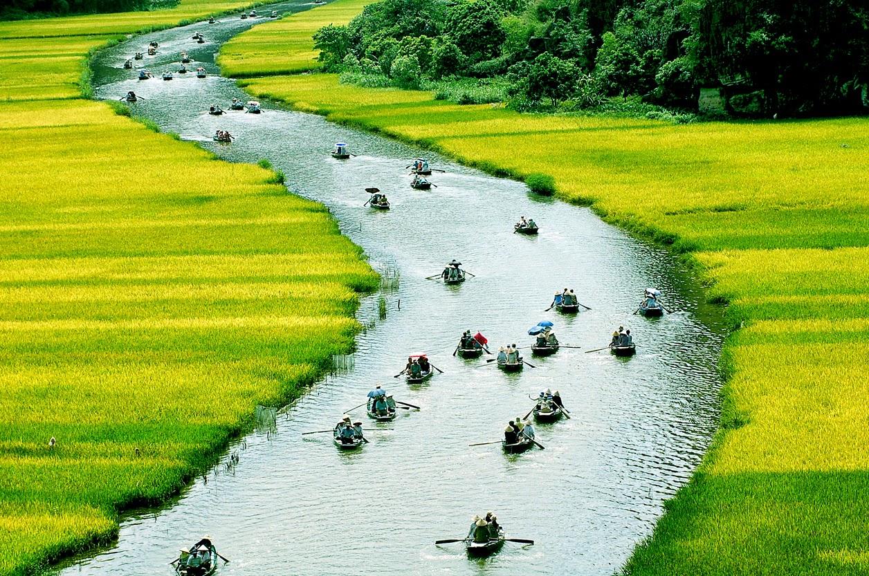 Hình ảnh quê hương với dòng sông uốn quanh bên đồng lúa